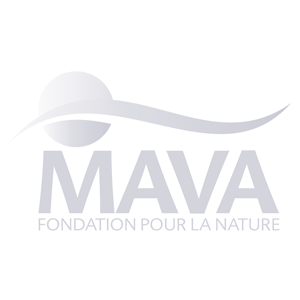 mava_gris